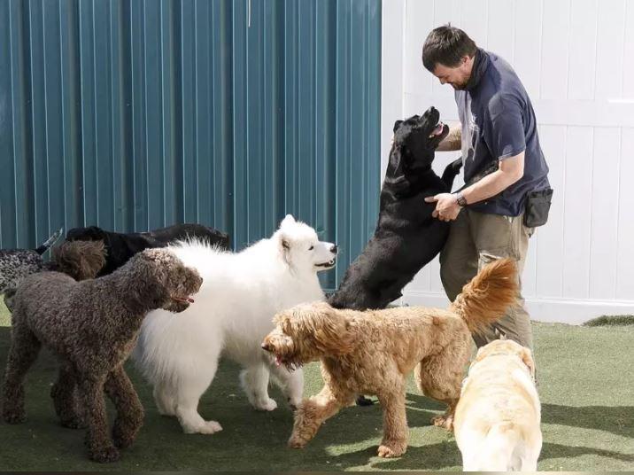 狗狗和人類的關係需要經營。美聯社