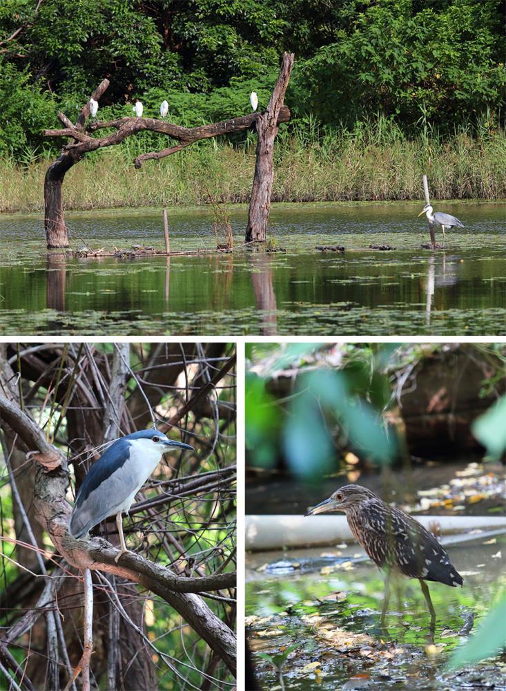 豐富的綠色植物包圍整片濕地,昆蟲與鳥類等物種齊聚,多樣化的棲地環境供各式生物自由...