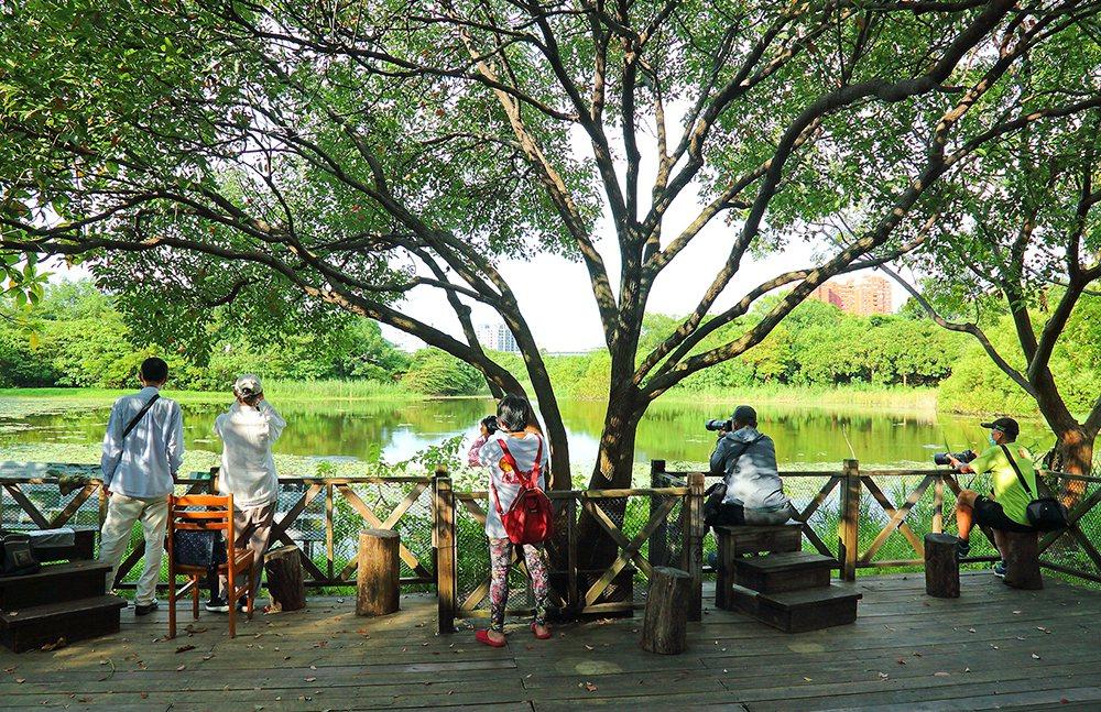 洲仔濕地公園是高雄都會區的自然教室,民眾可預約導覽進入環境教育區,近距離欣賞各種...