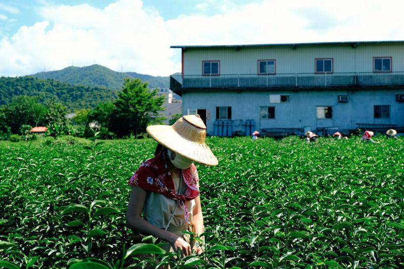 位於宜蘭的中山休區有著多項農遊體驗供旅客選擇(攝影/吉米)