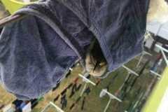 內褲晾陽台引來小鳥霸佔棲息 網笑翻:是多久沒收了?