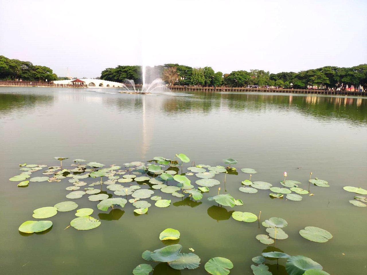 新營天鵝湖公園水色景致優美。 圖/謝進盛 攝影