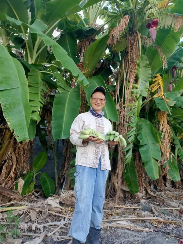 退休9個月的黃振宏,務農種最滿意的作物就數芭蕉,也送親友分享喜悅。 圖/黃振宏提...