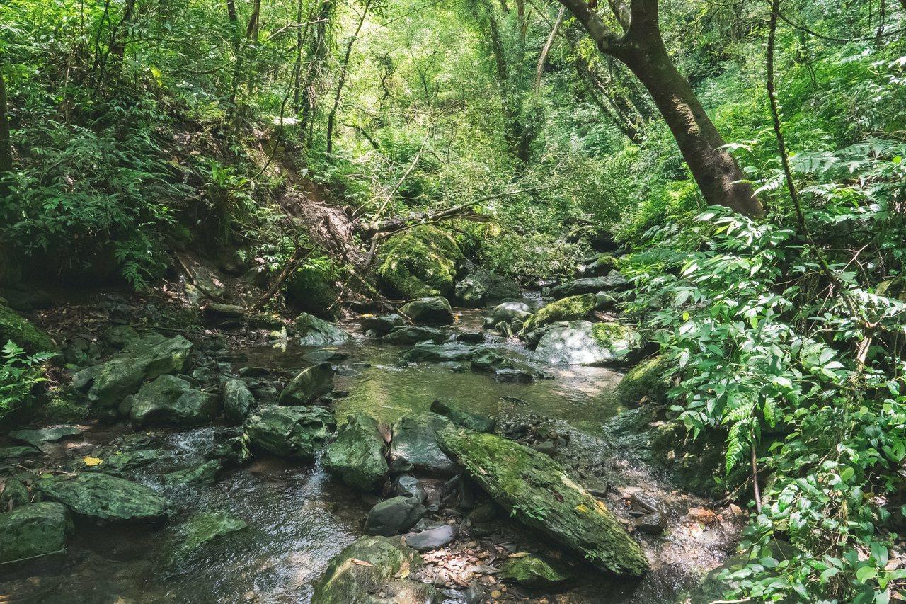 四堵古道環境清幽,步道平緩好走,從新北市坪林通至宜蘭,物種豐富,還有保育類植物可...
