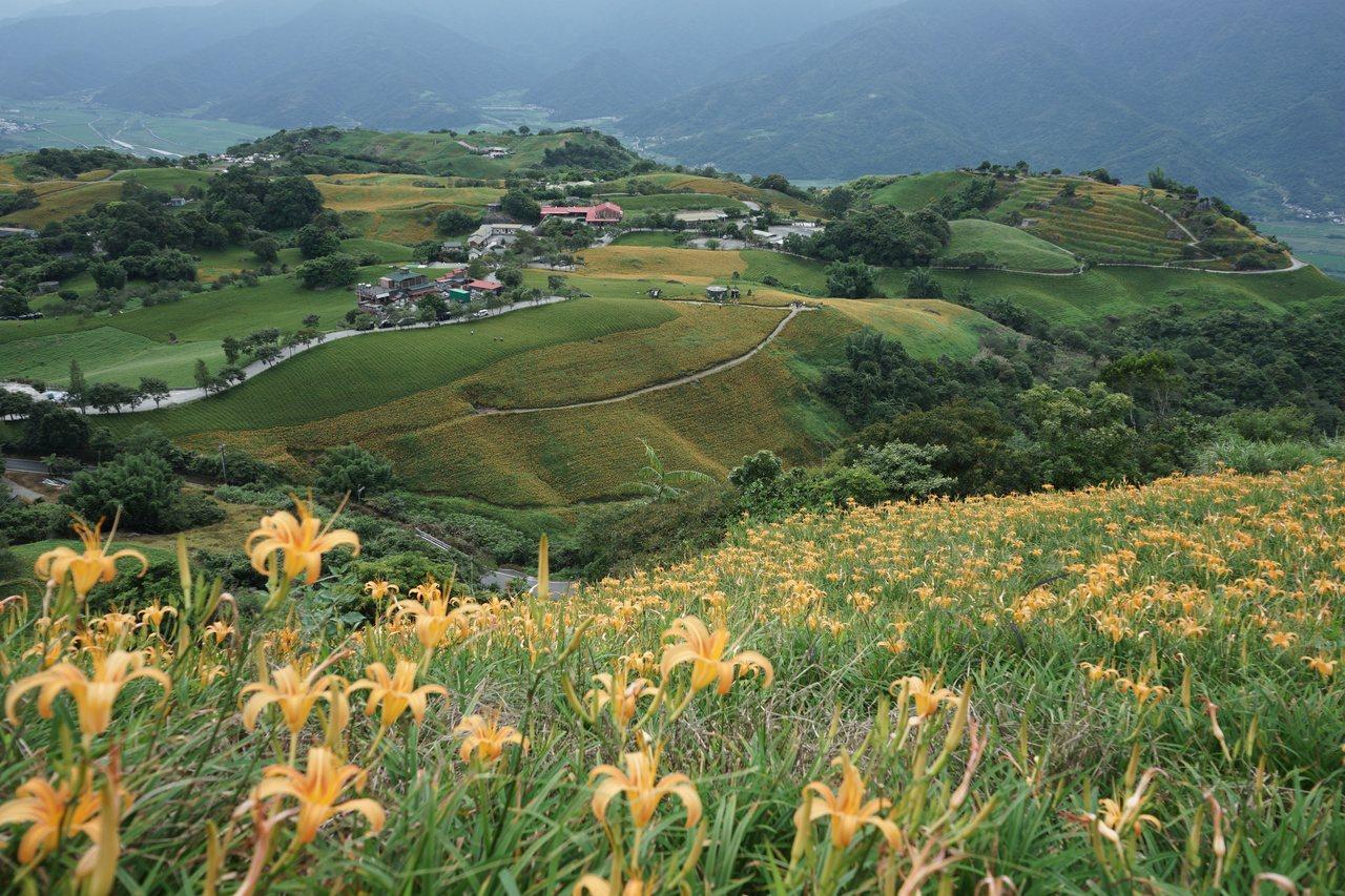 花蓮六十石山園區高點,花海美景盡收眼底。 圖/王燕華 攝影