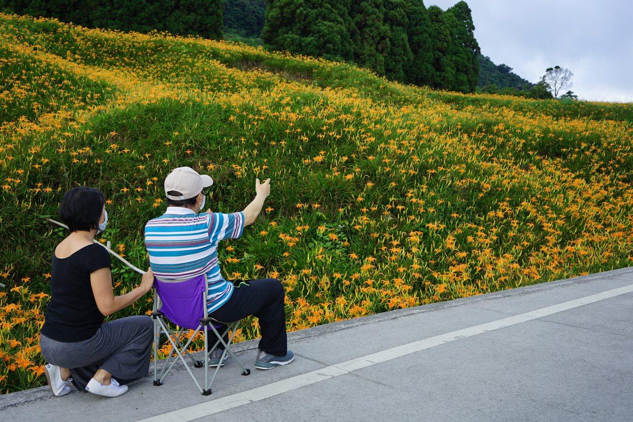 帶長輩山上賞花,建議可攜帶輕便的露營椅等,隨時隨地走累了就可坐下來休息。 圖/王...