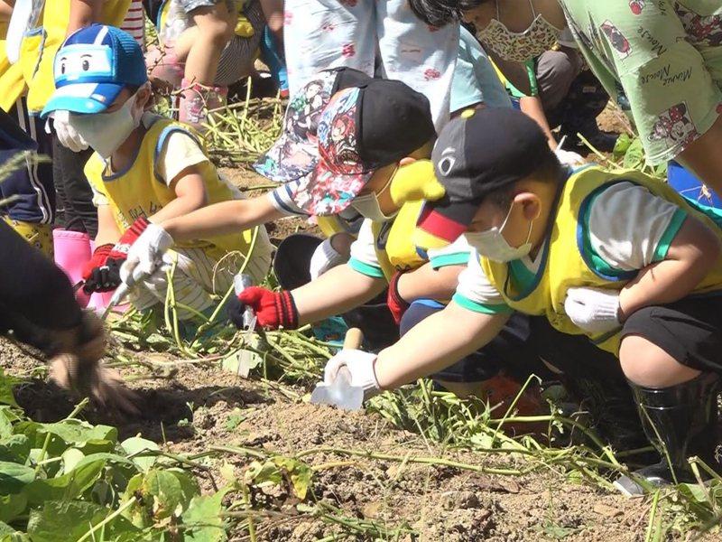 雙溪區公所舉辦挖番薯和山藥的體驗活動,邀請雙溪國小的小朋友了解家鄉的特色農產。 圖/觀天下有線電視提供