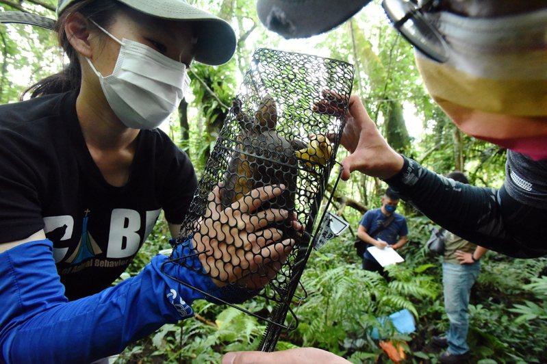 日月光與興大食蛇龜保育團隊培育新血輪,保育食蛇龜。日月光環保永續基金會提供