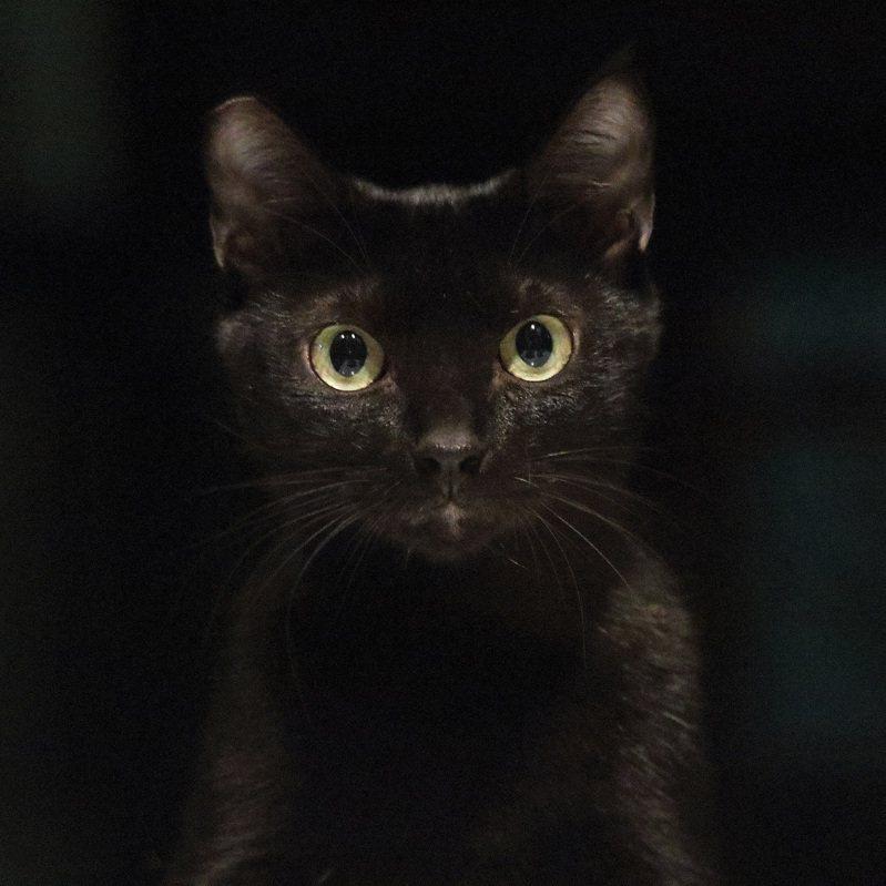 黑貓藝術家。攝影/吳毅平