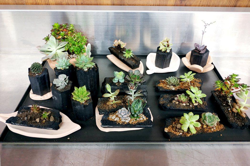 中國科大「擁護山河綠色保衛隊」開發DIY炭盆栽的樣品。 校方/提供