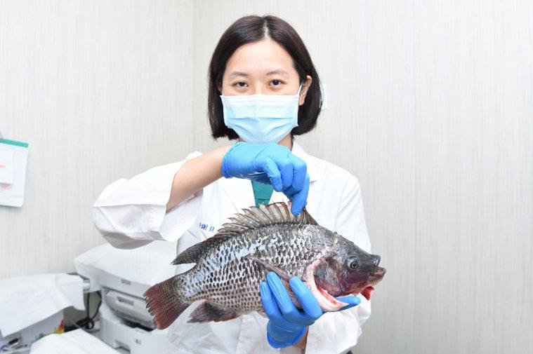 彰基急診暨重症醫學部副主任謝貝尤提醒民眾預防創傷弧菌感染,儘量不要吃生牡蠣或其他...