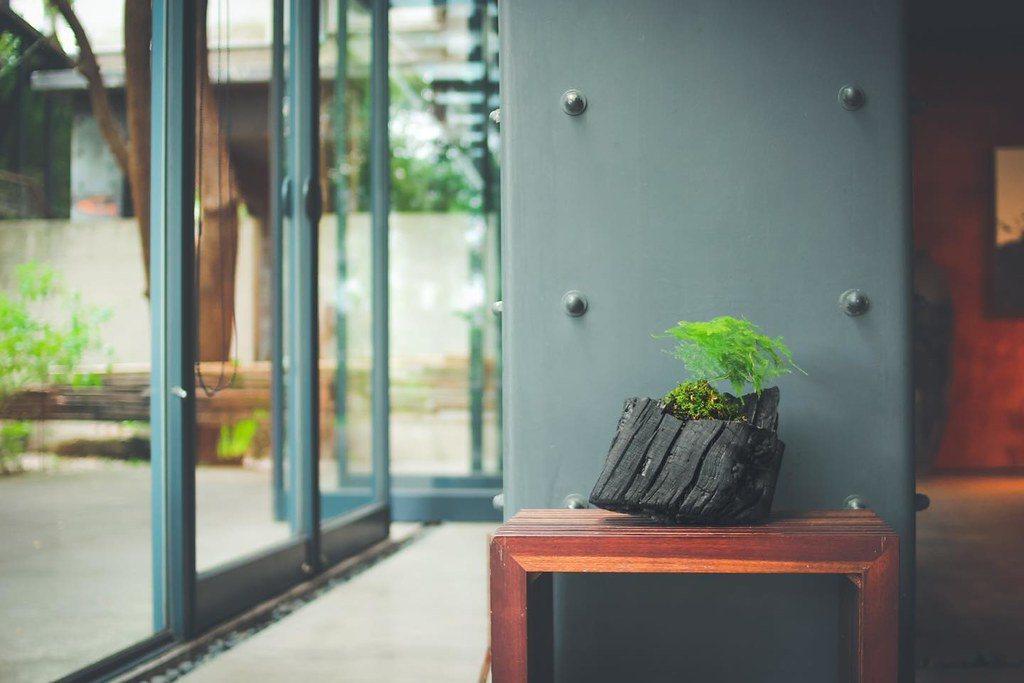 栽植鐵線蕨的相思木「炭及盆栽」,具有美化環境、淨化室內空氣的功能。 圖/農委會林...