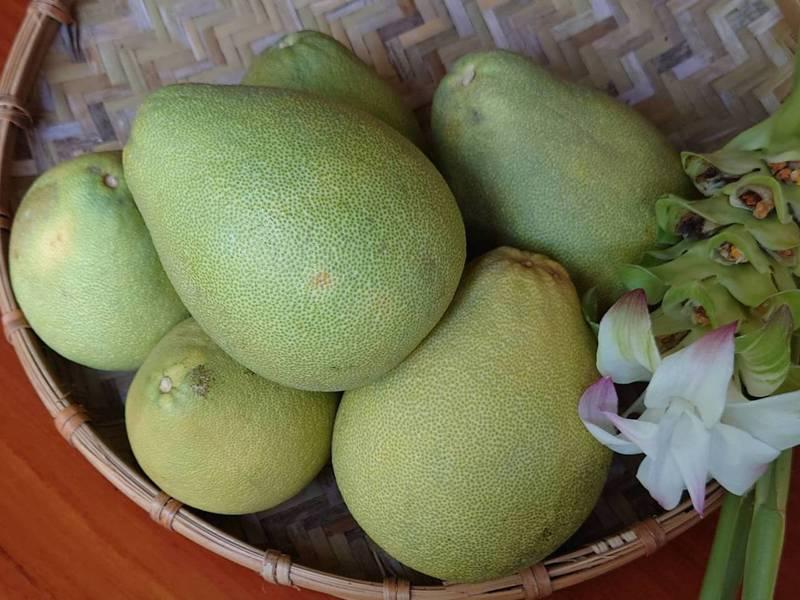 秋季限定水果柚子富含纖維質和維他命c等多種營養,可促進消化和排便。記者簡慧珍/攝影
