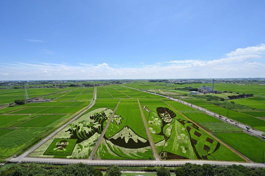 可於「古代蓮之里」內的展望室觀賞農田藝術。 埼玉縣/提供