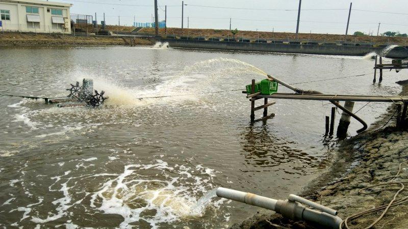 秋季魚病好發,高市動保處籲漁民加強管理防控疫病。記者王昭月/翻攝