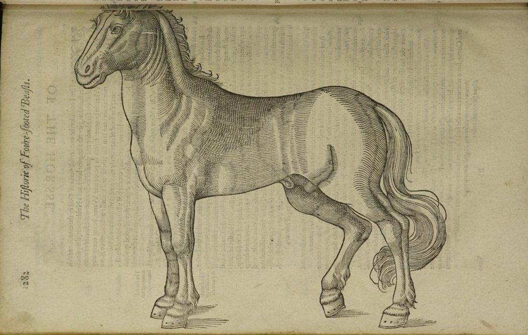 由托賽爾(Edward Topsell, c. 1572-1562)出版的《四足...