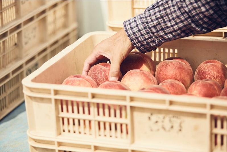 FSTAND負責人有井誠表示,在都會區超市賣的水果,通常是從果園採收、經盤商到批發市場,在超市上架,消費者買到的時候,已經過了好幾天。圖/取自FSTAND推特