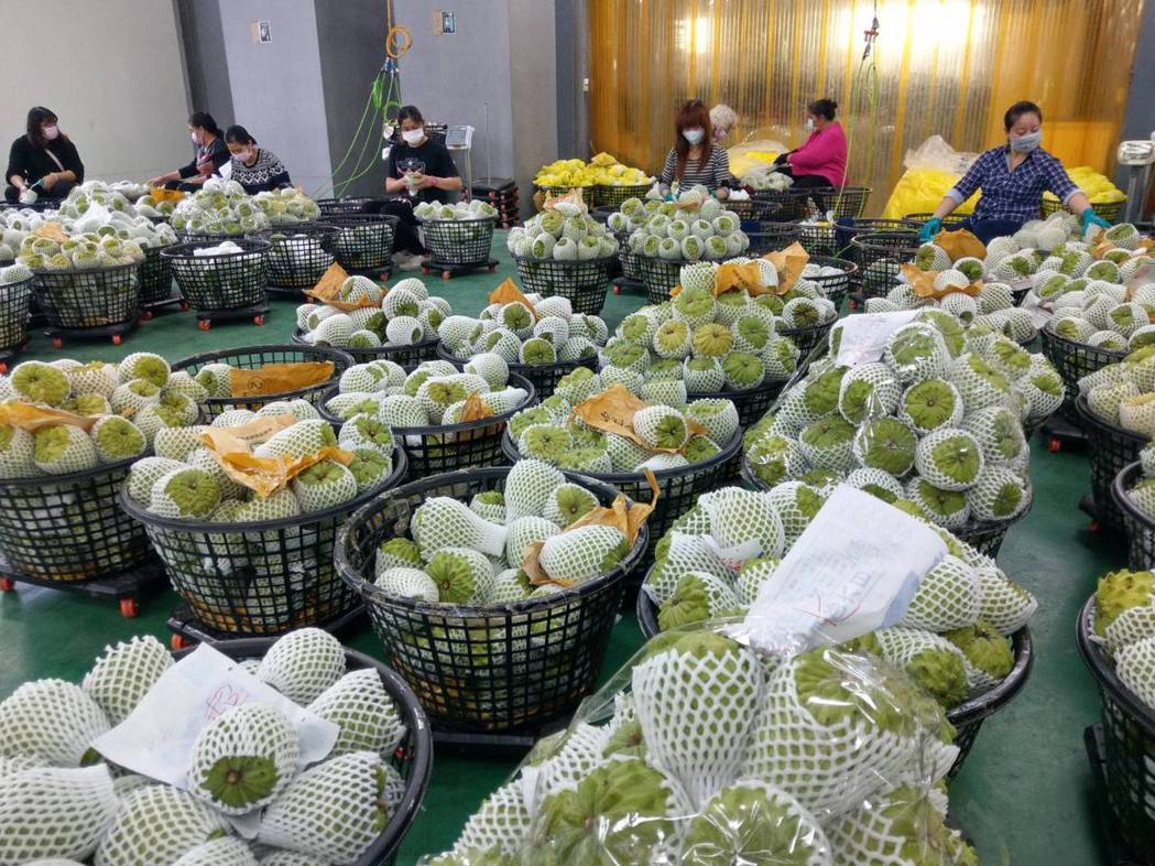 農委會曾加碼台東鳳梨釋迦銷往中國大陸的通路運費補助。(記者尤聰光/攝影)