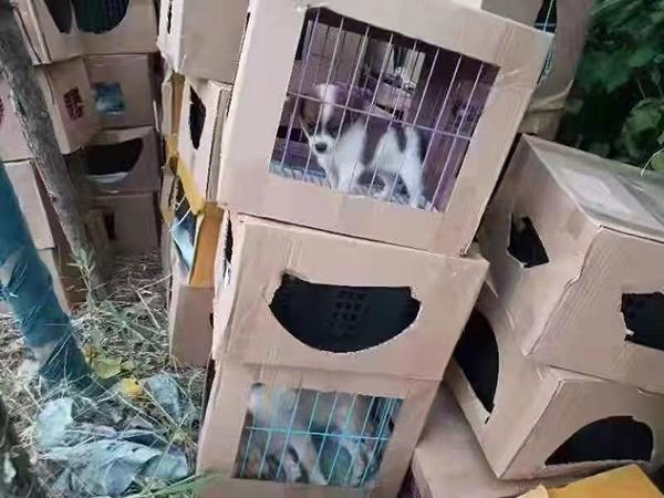 上海街頭驚現上百盒「寵物盲盒」被遺棄路邊。圖源:新民晚報