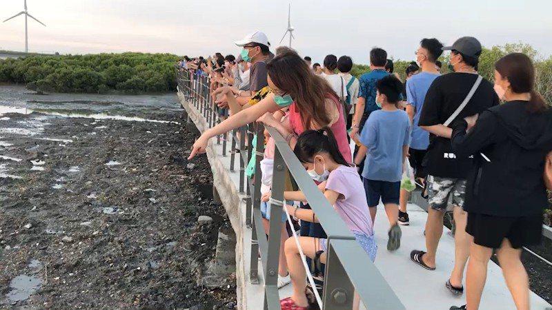 彰化縣芳苑濕地紅樹林海空步道適合親子同遊,大受歡迎,步道上遊客如織。記者簡慧珍/攝影