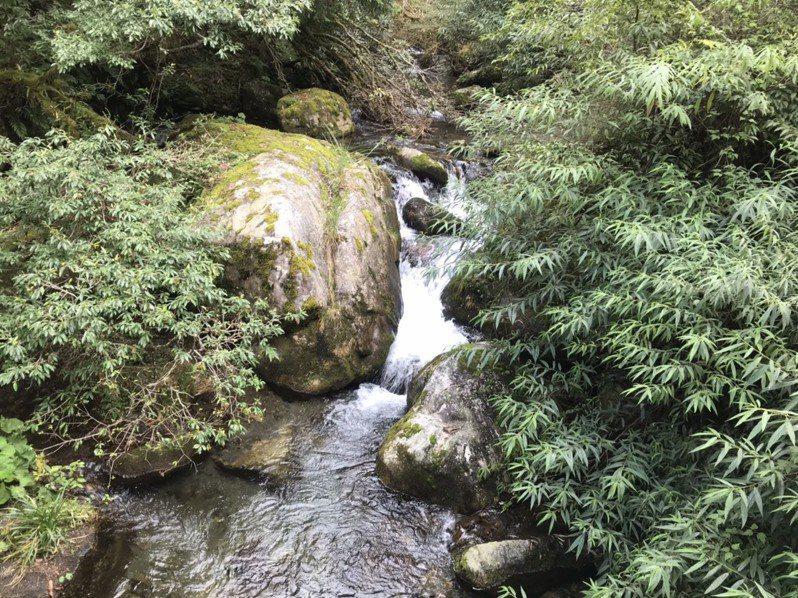 羅葉尾溪是放流櫻花鉤吻鮭的重要棲地。記者吳姿賢/攝影