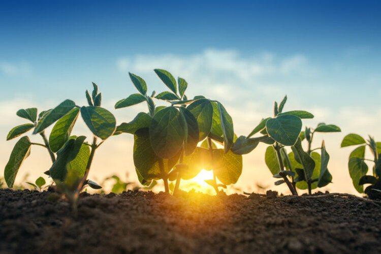 土壤的健康像是微生物對人類腸道的作用,須達到一定的平衡。 圖/AGfunder