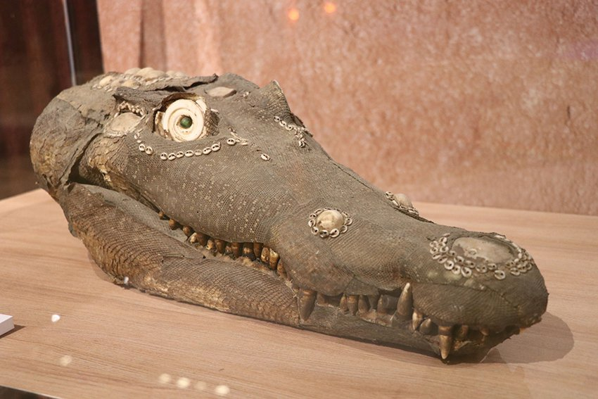 巴布亞紐幾內亞的鱷魚面具樣貌非常逼真。 十三行博物館/提供