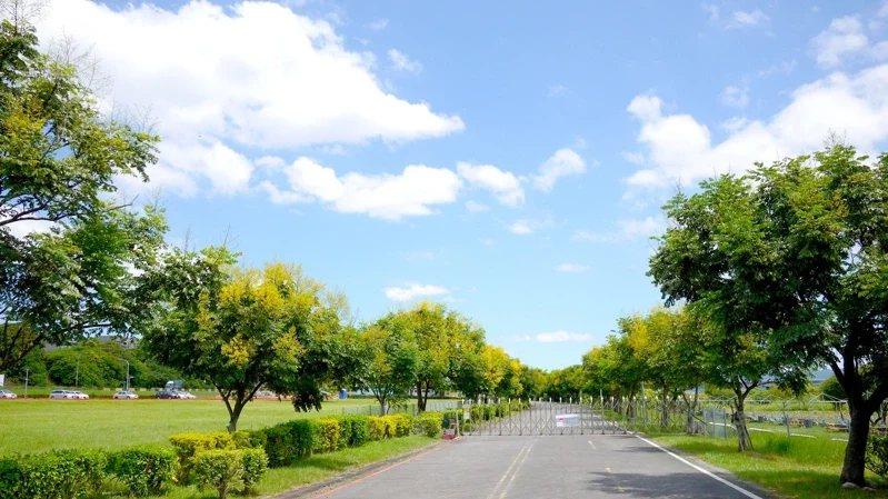 台灣欒樹沿線紛紛綻放,成為最美的黃金雨大道。 圖/新北市水利局提供