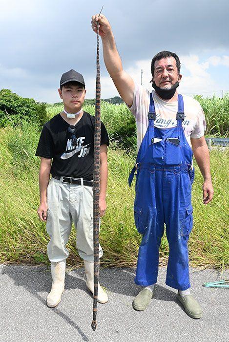 日本沖繩有農夫在田裡發現長達176公分的赤煉蛇,長度幾乎和成人差不多。圖擷取自琉球新報