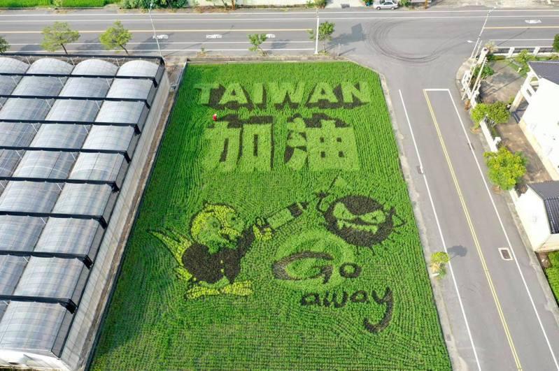 苑裡鎮農會今年稻田彩繪中,「台灣加油」有小燕子拿疫苗對抗新冠病毒的圖案,燕子正是苑裡農會的標誌和吉祥物。圖/苑裡鎮農會提供