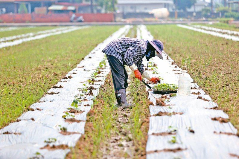 台北市長柯文哲昨表示,台灣若加入CPTPP,對農業、服務業將產生衝擊。記者劉學聖/攝影