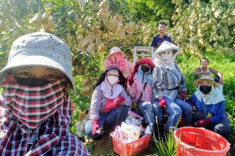 台南楠西農工團由楊沁涓(左)號召志同道合農友,在農忙期「相伴陪」互相幫忙。圖/楊沁涓提供