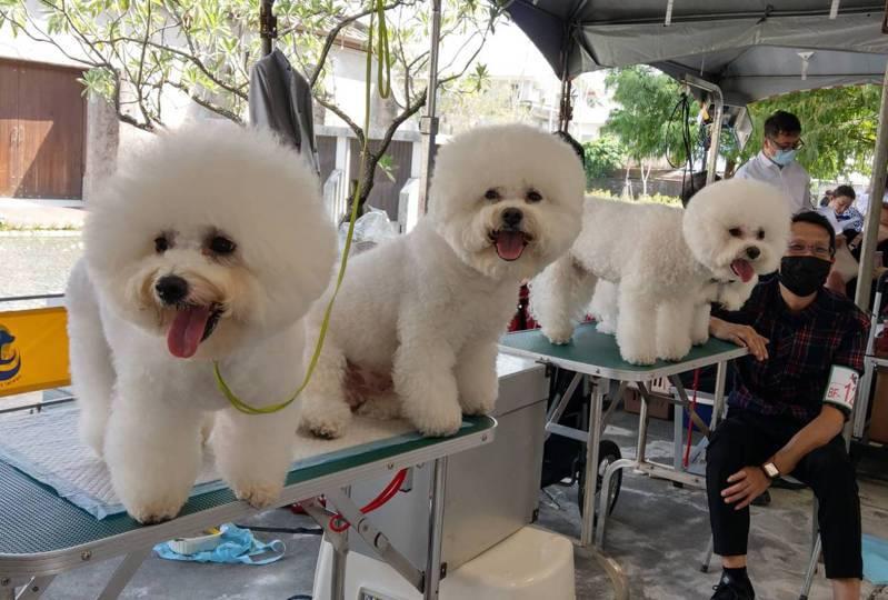 宜蘭寵物嘉年華活動在中興文創園區舉行,吸引來自各地超過50個犬種、約200隻寵物犬進行體態及步容競賽,每隻犬健康且充滿自信,讓人直呼可愛。記者戴永華/攝影