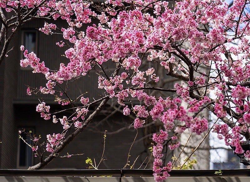 「璞園袖里春」附近街道的寧靜氛圍,讓真下宗治想到日本的巷弄。