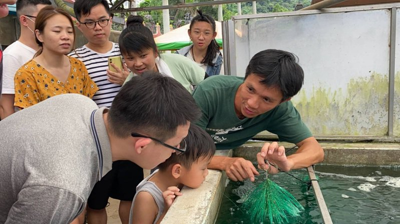 佳河錦鯉也是社區農遊的亮點之一,有一整天說不完的故事。圖/三和青創基地提供
