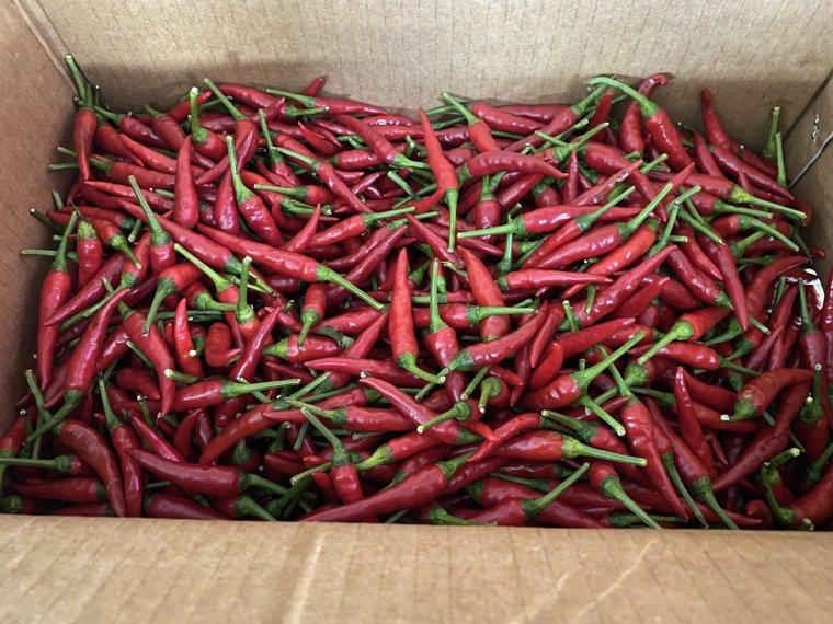 新北投攤販集中區(復興市場)菜攤販售的朝天椒被抽驗農藥超標。圖/北市衛生局