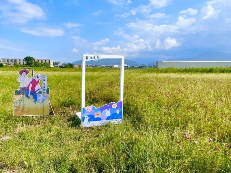 波斯菊花海設有地方生態、作物推廣板等裝置藝術,介紹蘇澳多元特色。圖/蘇澳鎮公所提供