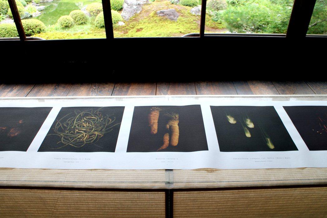 湯瑪士・德勒美的「菜光-凡爾賽宮庭院的古代種」展覽。 圖/陳怡秀攝影