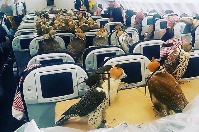 2017年一位中東王子購買了80隻猛禽,帶上飛機後分別替每隻各訂購一張機票,「一...