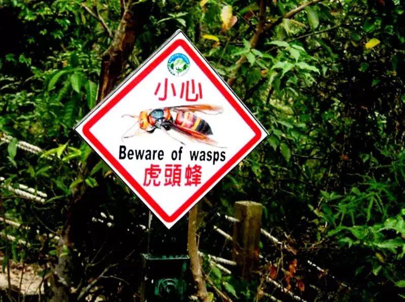 玉山國家公園時常發生有虎頭蜂螫人,去年八通關古道甚至山友集體遭黑腹虎頭蜂攻擊送醫...