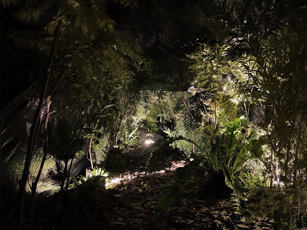 高低落差的結構,如同在森林與岩洞中穿梭。 圖/森深試務所提供