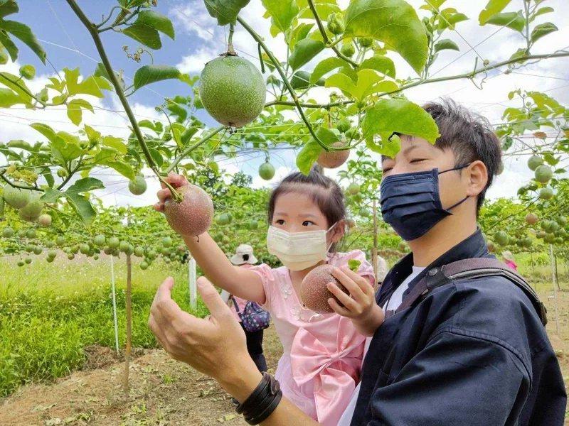 遊客採摘友善耕作的百香果。  圖/羅東林管處提供
