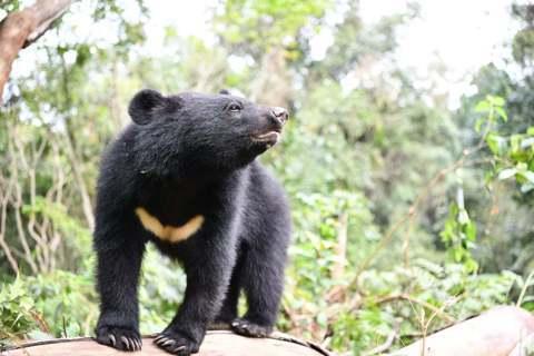 黃美秀/黑熊下山來偷雞?大雪山黑熊的滋擾事件之分析與啟示