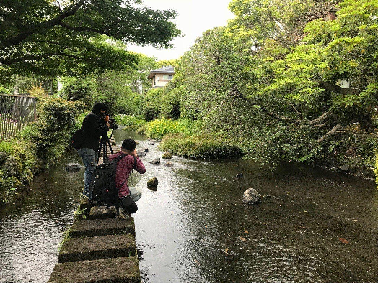 走在源兵衛川上,水清草綠,還有飛鳥掠過,撫慰了焦躁的心。
