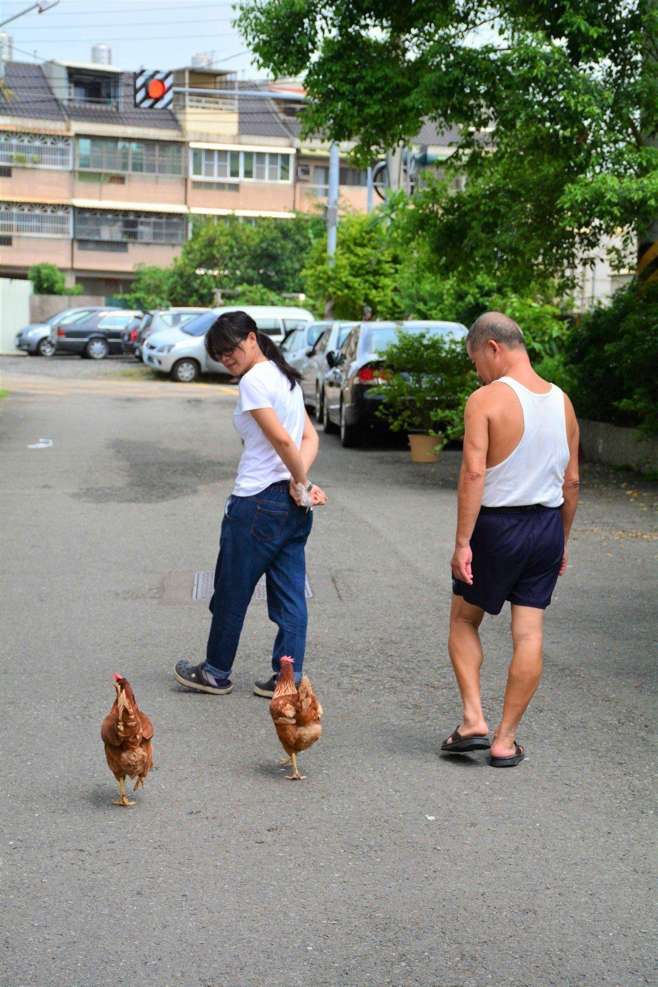 楊環靜鼓勵父親每天帶雞散步、透透氣,如今已成習慣。(圖片提供/楊環靜)