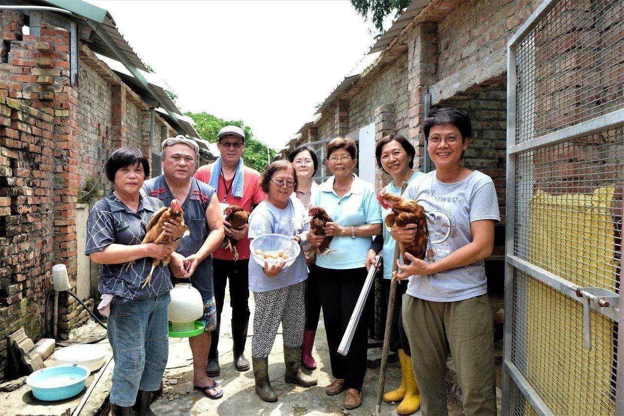 高雄的「松埔樂齡友雞生產基地」是由一群活潑的中高齡長者飼養。(攝影/郭琇真)