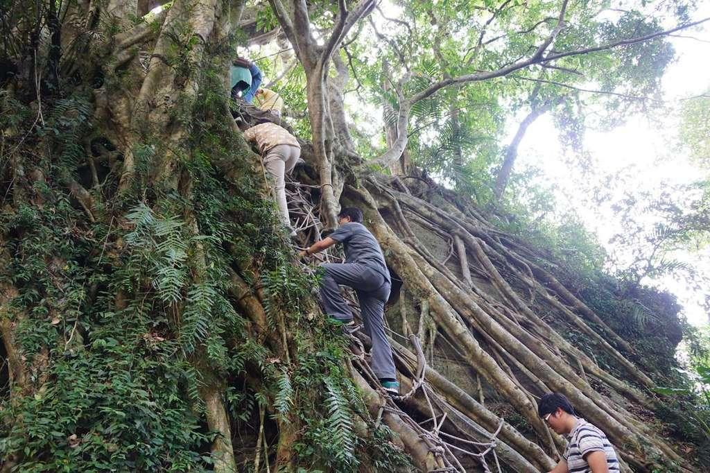 森林博物館爬樹關卡。 圖擷自台東觀光旅遊網
