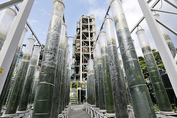 台泥花蓮和平廠利用微藻進行碳捕捉以達成生態減碳。記者鄭超文/攝影