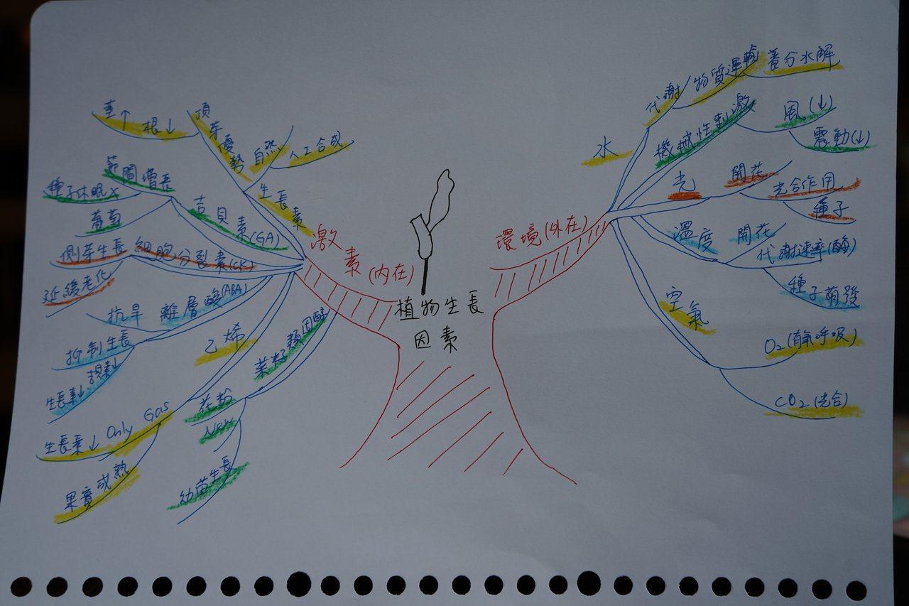 心智圖適合複雜、創意思考或集思廣益的主題。記者邱榆蕙/攝