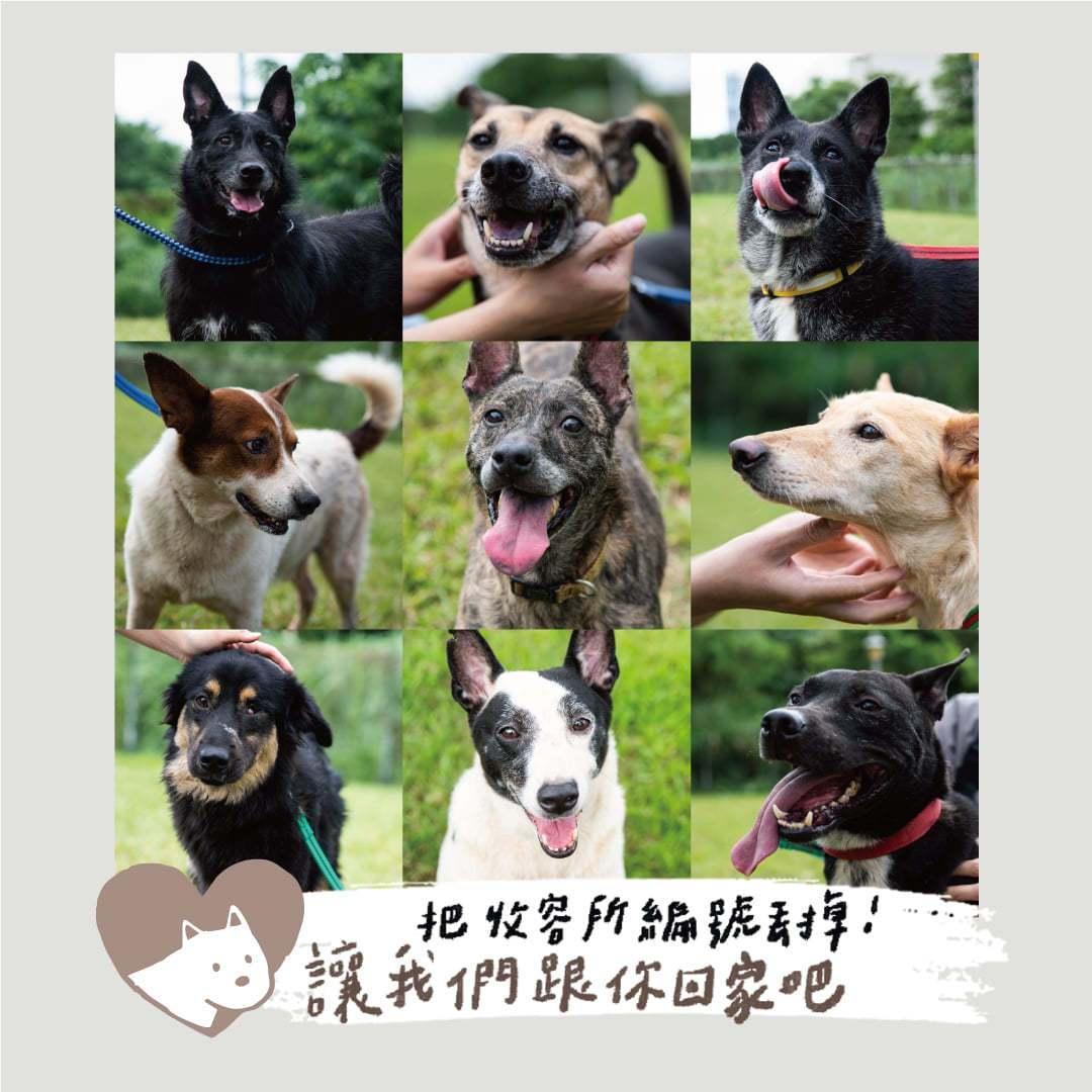 台北市動保處與攝影師合作,推廣邊緣犬認養